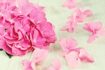 pastel shades: hydrangea flower on wooden surface