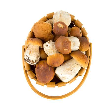 boletus mushrooms in a basket over white photo