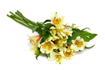 alstroemeria: alstroemeria flowers