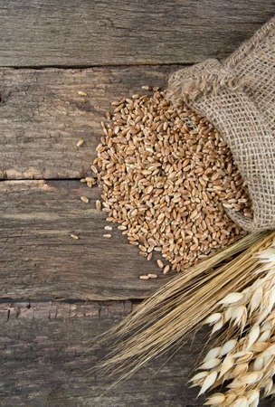 barley and oats on wooden surface photo