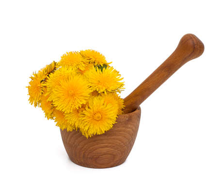 yellow dandelions in a mortar isolated on white photo