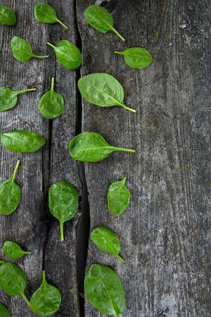 fresh spinach: fresh spinach leaves