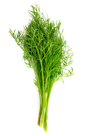 dill: fresh dill isolated on white