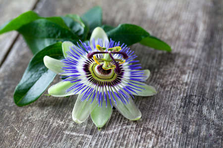 passion flower on wooden surface