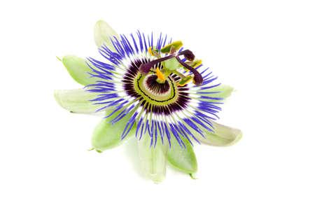 paix�o: flor da paix�o isolada no branco Banco de Imagens