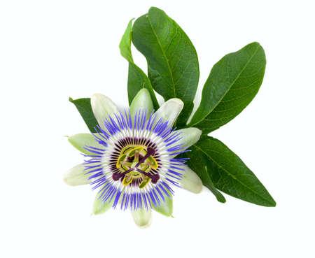 Fleur de la passion isolé sur blanc Banque d'images - 41018424