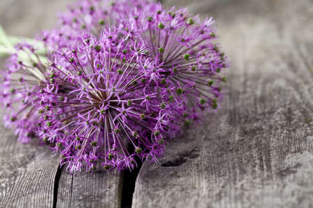 alliaceae: alium flowers on wooden surface Stock Photo