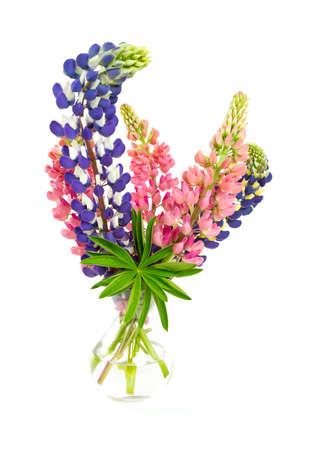 champ de fleurs: fleurs du lupin colorés isolé sur blanc