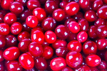 arandanos rojos: ar?ndanos agrios