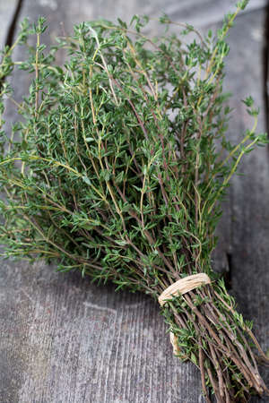 tomillo: bunch of thyme Foto de archivo