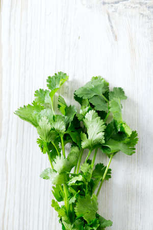cilantro: cilantro over wood Stock Photo