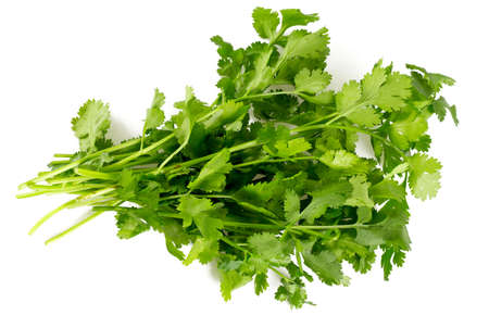 cilantro: cilantro isolated on white