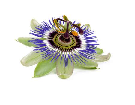 pasion: flor de la pasión aislado en blanco