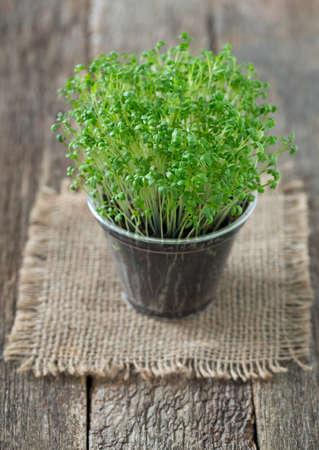 cress: growing garden cress