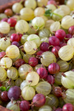 gooseberries: gooseberries background