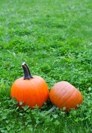 pumpkins on grass Stock Photo
