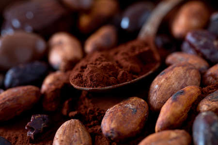 cocoa and chocolate candies