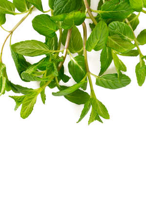 mint leafs isolated on white background Stock Photo