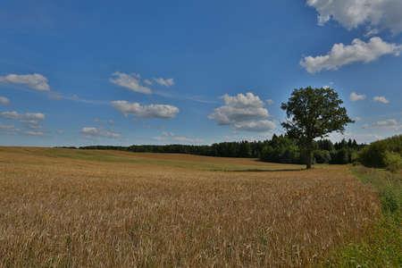 arando: beautiful wheat field
