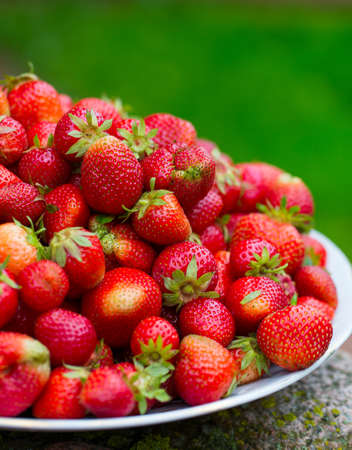 strawberries on a plate in garden
