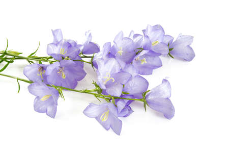 Collection of bell flowers isolated on white background