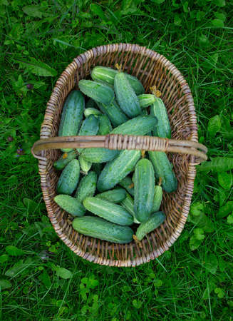 cucumbers in a basket on green grass