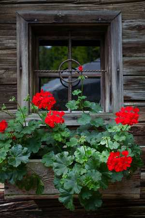 old wooden window and flowers