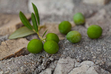 olive green: twig of olives on stone background