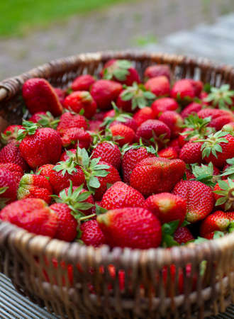 basket with strawberries in garden Stock Photo