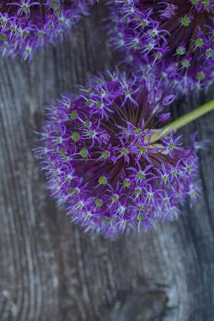 alium flowers on wooden surface Banco de Imagens