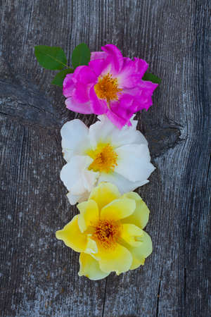 pink, white and yellow roses on wooden surface Standard-Bild