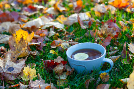 tea and autumn leaves Banque d'images