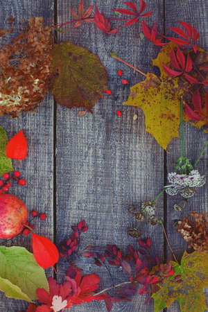 autumn leaves, berries and flowers