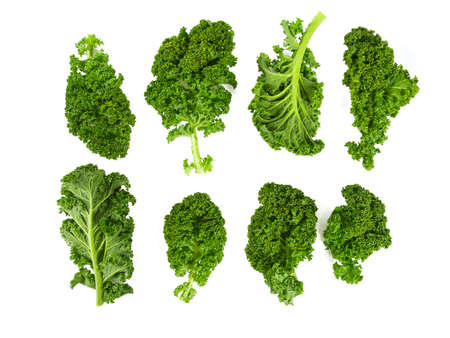 kale isolated on white