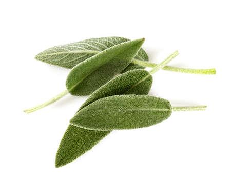 feuilles de sauge isolées sur blanc