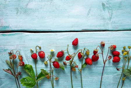 Wild strawberries on turquoise surface