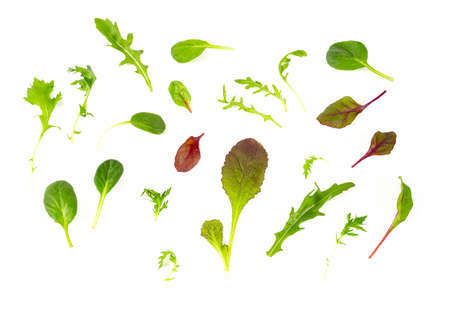 lettuce mix isolated on white background Standard-Bild - 124532102