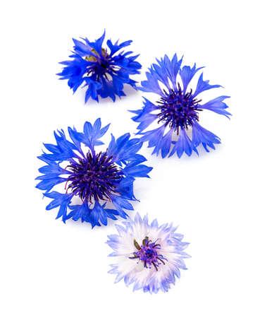 Blue Cornflower Herb isolated on white Reklamní fotografie