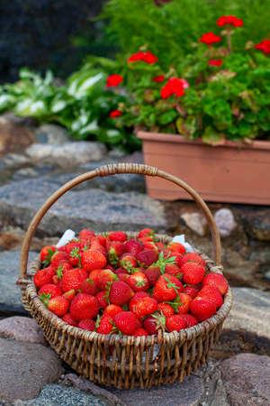 basket full of strawberries in a beautiful garden