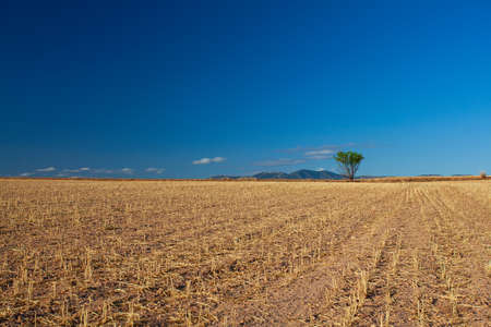 agricultural field with yellowing grass Foto de archivo