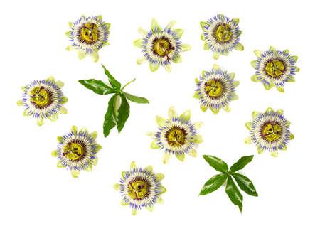 fleur de la passion isolé sur fond blanc Banque d'images