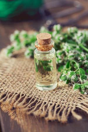 essential oil with fresh marjoram herb Stockfoto