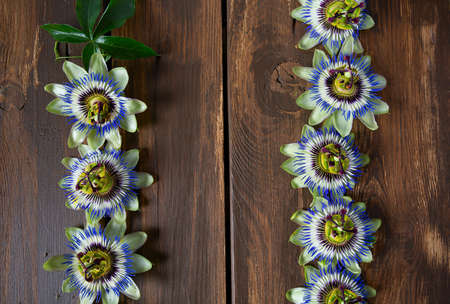 passion flowers on dark wooden surface 免版税图像