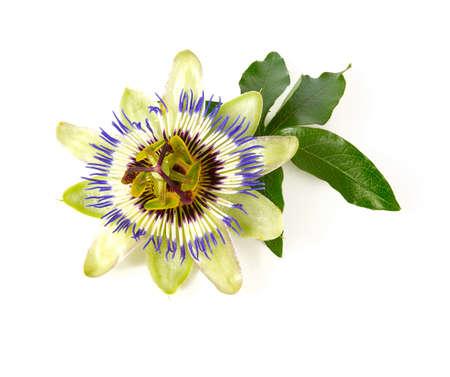 flor de la pasión, aislado, blanco, plano de fondo