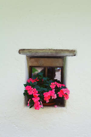 old window and flowers Imagens