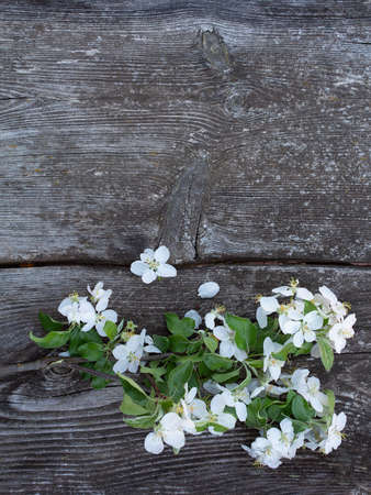 apple blossoms on old wooden surface