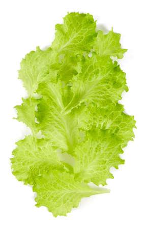 fresh lettuce isolated on white background Zdjęcie Seryjne