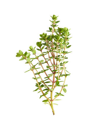 twig of thyme isolated on white background Stock Photo