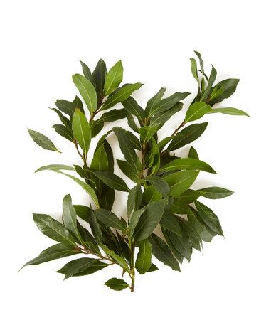 bay leaf isolated on white background