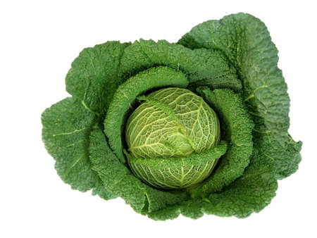 Big Green Cabbage